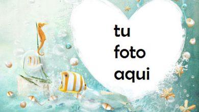 Corazón Bajo El Agua Con Los Peces Más Bellos Marco Para Foto 390x220 - Corazón Bajo El Agua Con Los Peces Más Bellos Marco Para Foto