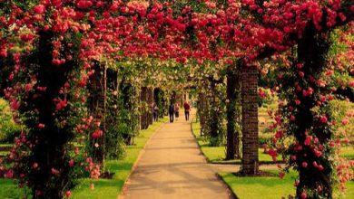 Escribir En Foto Imagen de la forma más hermosa rosa esplendor en belleza 1 390x220 - Escribir En Foto Imagen de la forma más hermosa rosa esplendor en belleza