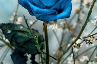 Escribir En Foto Imagen de las flores naturales más bellas en una copa romántica 1 332x220 - Escribir En Foto Imagen de las flores naturales más bellas en una copa romántica