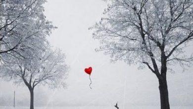 Escribir En Foto corazon con alas 390x220 - Escribir En Foto corazon con alas