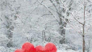 Escribir En Foto corazon sin relleno 390x220 - Escribir En Foto corazon sin relleno