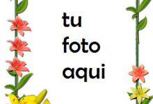 Flores Lilas Rojas Y Amarillas Marco Para Foto 220x150 - Flores Lilas Rojas Y Amarillas Marco Para Foto