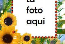 Girasoles Marco Para Foto 220x150 - Girasoles Marco Para Foto