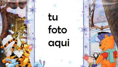 Osito Tigre Y Osito Marcos Para Foto 390x220 - Osito Tigre Y Osito Marcos Para Foto