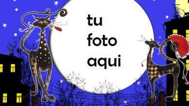 Marco Para Foto Gatos En El Techo Variedad Marcos 390x220 - Marco Para Foto Gatos En El Techo Variedad Marcos