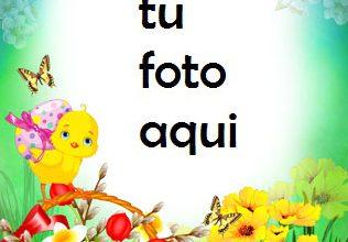 Marco Para Foto Tarjeta De Pascua Brillante Primavera Marcos 316x220 - Marco Para Foto Tarjeta De Pascua Brillante Primavera Marcos