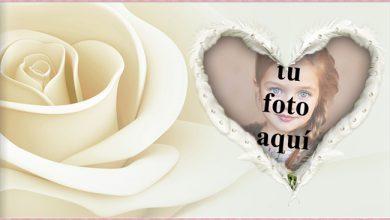 Foto Marcos el corazon de rosa blanca 390x220 - Foto Marcos el corazon de rosa blanca