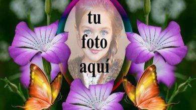 Un Marco De Hermosas Rosas Violetas Foto Marcos 390x220 - Un Marco De Hermosas Rosas Violetas Foto Marcos