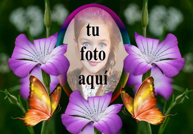 Un Marco De Hermosas Rosas Violetas Foto Marcos - Un Marco De Hermosas Rosas Violetas Foto Marcos