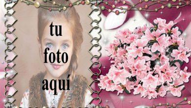 clasificado en marco de fotos morado decorado con flores 390x220 - clasificado en marco de fotos morado decorado con flores