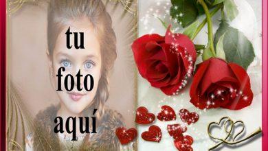 marco de fotos romantico rosas rojas 390x220 - marco de fotos romántico rosas rojas