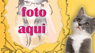 Gato Travieso Mascotas Foto Marcos 390x220 - Gato Travieso Mascotas Foto Marcos
