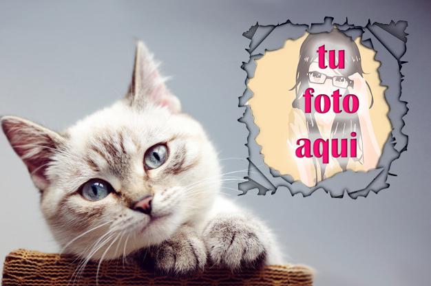 La Mirada Mascotas Foto Marcos - La Mirada Mascotas Foto Marcos